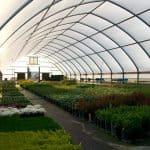 Patt's Garden Center